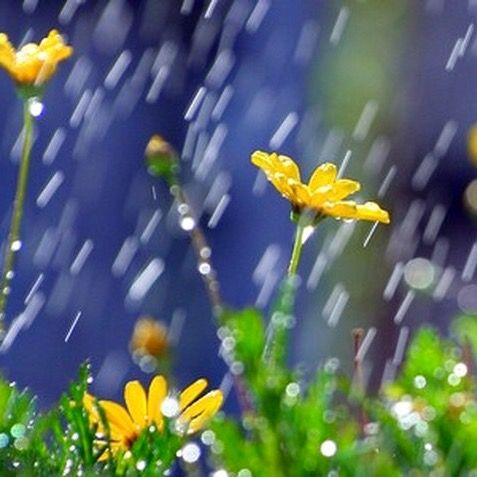 """""""The April rain, the April rain, Comes slanting down in fitful showers, Then from the furrow shoots the grain, And banks are fledged with nestling flowers....""""  ~ Mathilde Blind, """"April Rain"""" (image at cherylhunter.com)"""