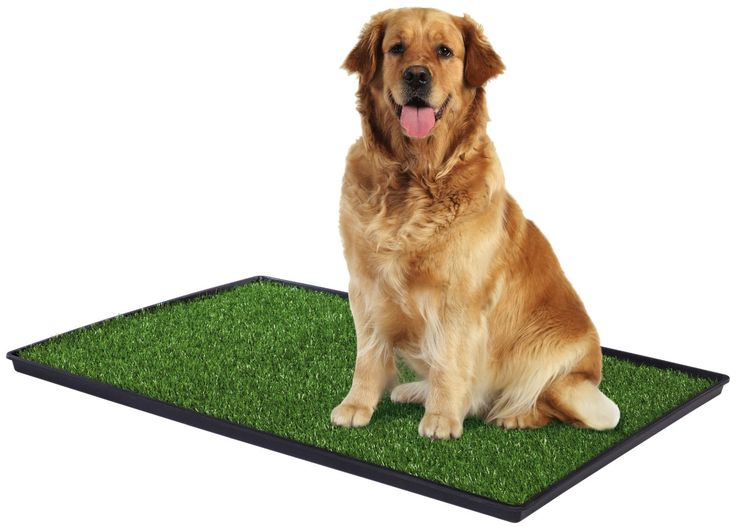 How to give Indoor dog potty training to the dog https://goo.gl/8vXHvo There are many dog owners who are very busy with their lives they don't have time to take their pooches out for a walk on regular basis or due to climatic conditions. #Indoordogpotty #Indoorpeepads
