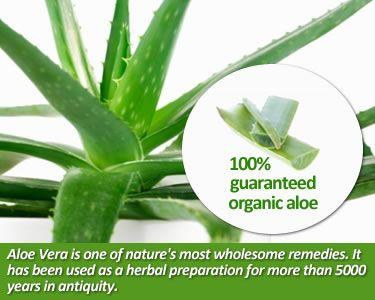 Let Aloe surprise you as it: * Cleanses and supports your digestive system * Infuses you with energy * Hydrates your skin * Soothes and promotes skin renewal * Supports your immune system * And so much more