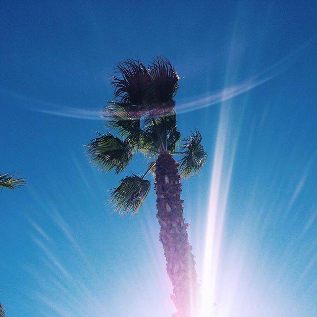 Super blue Monday sky  #vscocam #vsconature #dslooking #abmtravelbug #photooftheday #palms #sunny #blue #sky #abmlifeiscolorful #barcelona