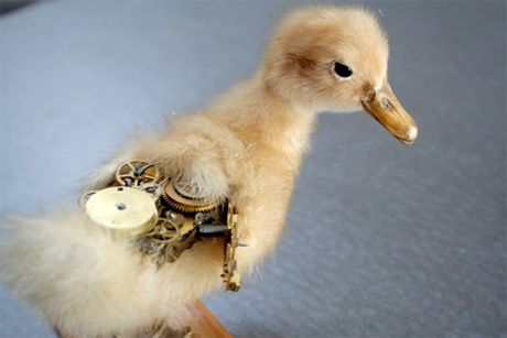 New Zealand taxidermist Lisa Black has gained a following in the steam punk community for combining animals with machine parts, creating creatures that wouldn't look out of place murdering a mad scientist before breaking out of the lab and taking the city hostage.