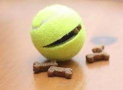 Godis- eller kastboll - Underbarahund.se