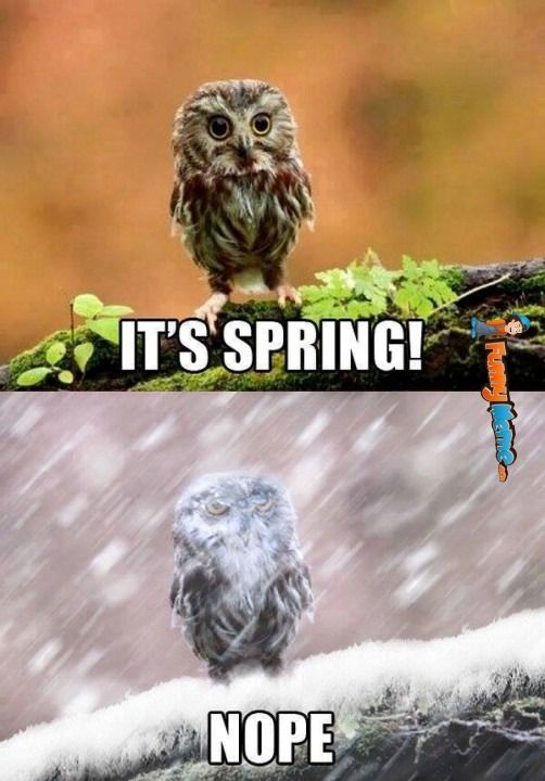 "15 Funny Spring Memes To Get You Through These Chilly ""Spring"" Days"