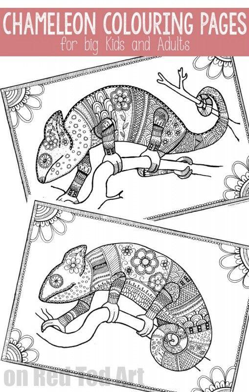 51 best chameleons for creative coloring images on
