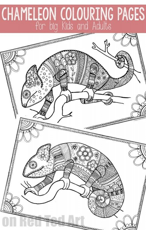 Free Colouring Pages for Grown Ups - cool chameleons