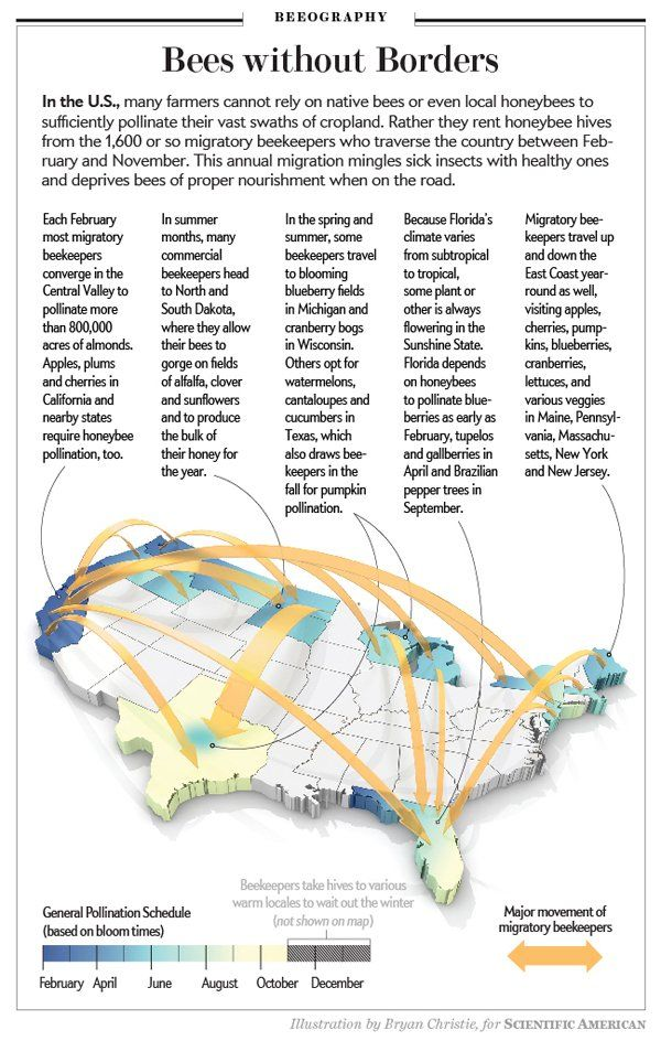Migratory Bee Keeping Map Bee Keeping Bee Friendly Scientific American Magazine