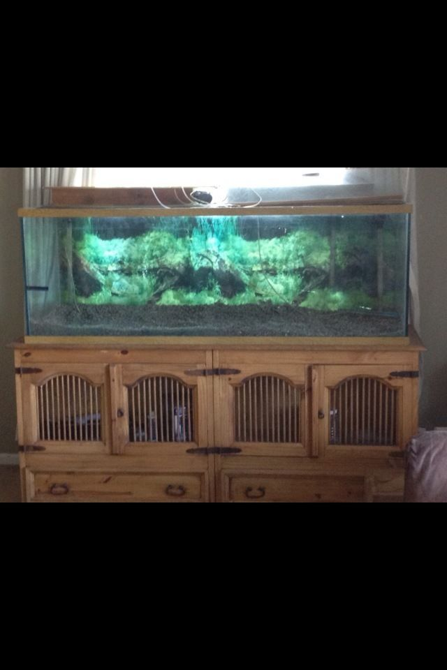 180 gallon Aquarium with base, holds water and doesn't leak.solid wood base #Marineland