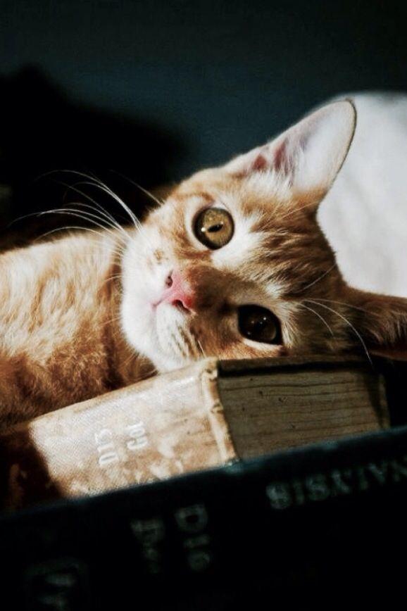"Irish proverb ""Beware of people who dislike cats."""