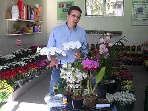 Dicas de jardinagem: Como cuidar de orquídeas - YouTube