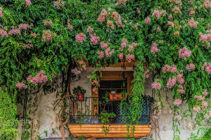 Flower balcony by gorwal_photography check out more here https://cleaningexec.com