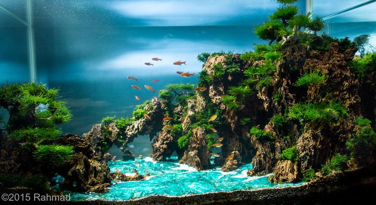 1000+ images about Aquascaping on Pinterest Aga, Planted aquarium ...