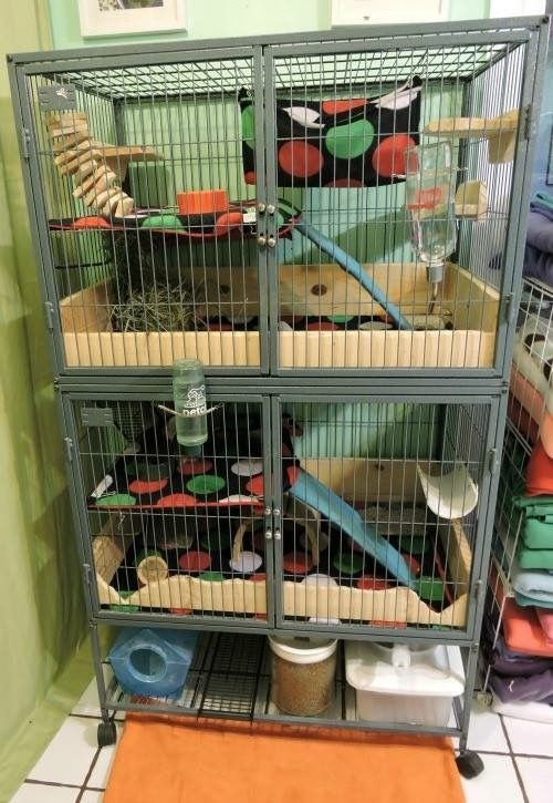 Chinchilla Cage setup ideas from Ratgirl44 on YouTube