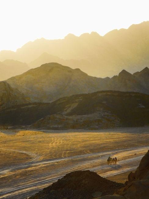 Somewhere in the Egyptian desert (egypt,camels,desert,light,sunset,sun)