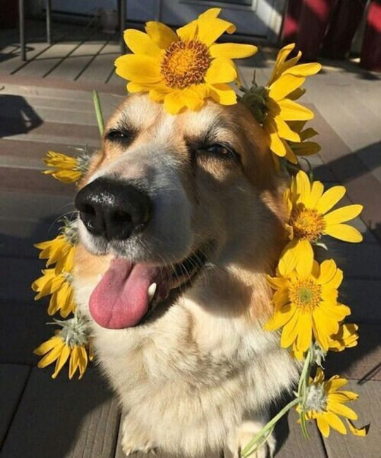 """Hope you're doing well..From your friends at phoenix dog in home dog training""""k9katelynn"""" see more about Scottsdale dog training at k9katelynn.com! Pinterest with over 22,300 followers! Google plus with over 585,000 views! You tube with over 600 videos and 60,000 views!! LinkedIn over 13,200 associates! Proudly Serving the valley for 12 plus years! now on instant gram! K9katelynn"""