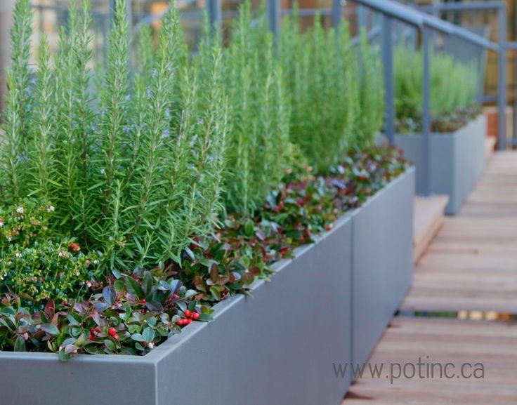 Rooftop Gardening 8 best rooftop gardening images on pinterest | rooftop gardens