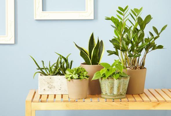 5 plantes d'intérieur impossibles à tuer