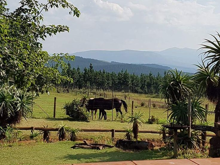 Peaceful, quite in the mountains and forests... view from our farm style accommodation.... Kaapsehoop Horse Trails...#naturalbeauty #mountains #horses #backpackers #stopover #affordable #friendly #selfcatering #restaurant #deliciousmeals #outrides  #wildhorses #forests #internationalvolunteerprogram #wildlife #southafrica #photosafari #tourism #extremefrontiers #adventure #holiday #vacation #safari #tourist #travel