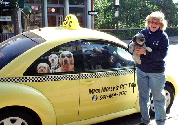 Miss Molly's Pet Taxi, Ashland, OR, has a horn that BARKS!  What a great idea!!!