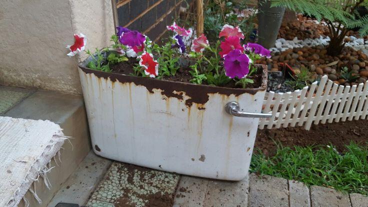 Cistern potplant