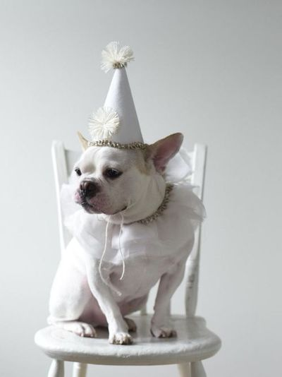 birthday princess frenchie: Parties Animal, Happy Birthday, Parties Hats, Puppies, French Bulldogs, Sweetpaul, Birthday Hats, Healthy Soups Recipes, Sweet Paul