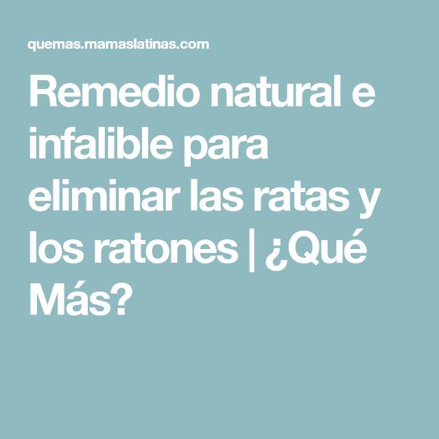Remedio natural e infalible para eliminar las ratas y los ratones | ¿Qué Más?