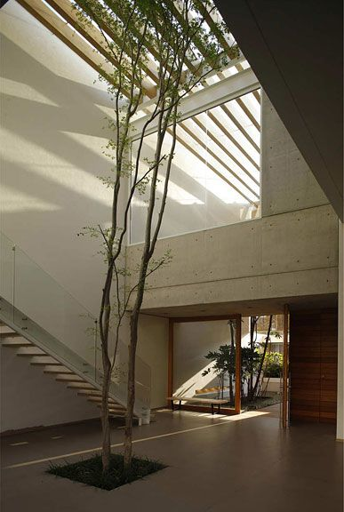 Natural Light And Indoor Plants
