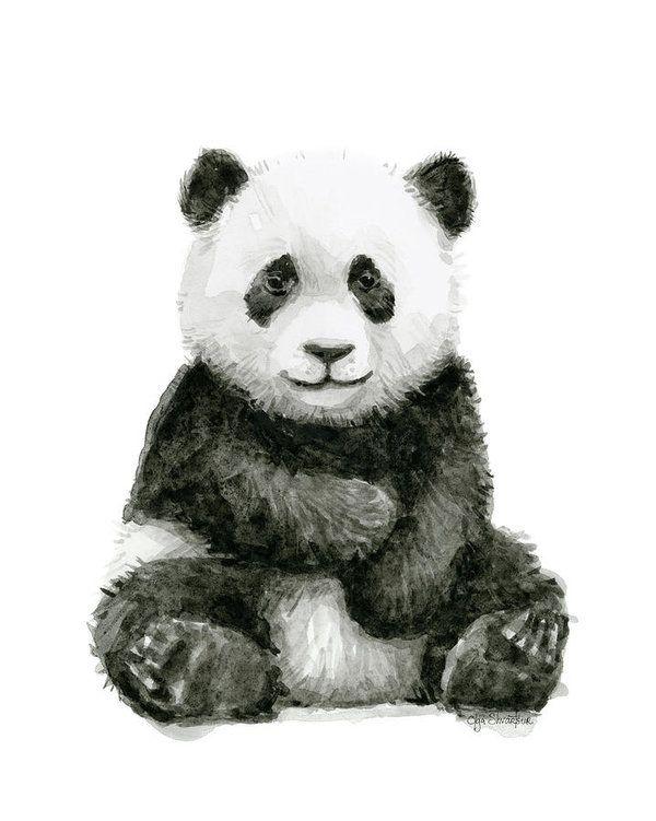 Baby Panda Watercolor Poster By Olga Shvartsur Panda Art Panda