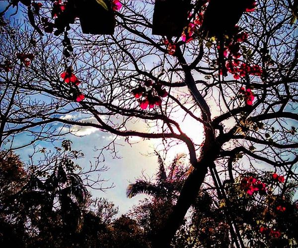 Lindo final de tarde à #flores #florecer #amaisbela #primavera 🙏🏻
