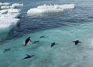 Ask a researcher: answers to kids' questions about Adelie penguins