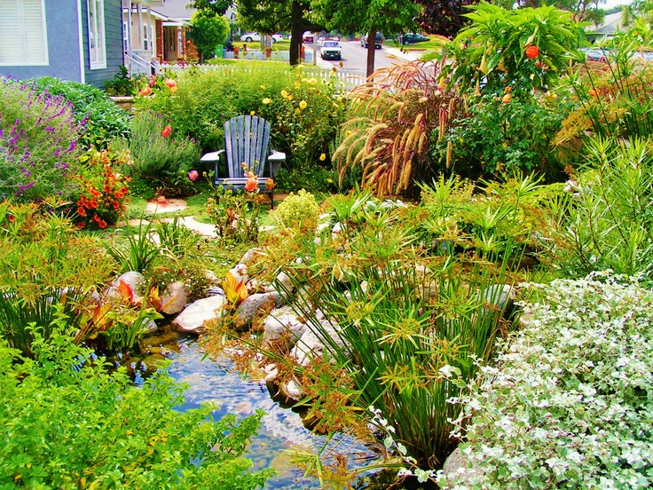 1000 images about california native plants on pinterest for Native pond plants