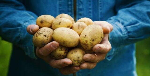 Pokud neoplýváte žádným pozemkem, ale toužíte si pochutnat na domácích bramborách, zkuste…