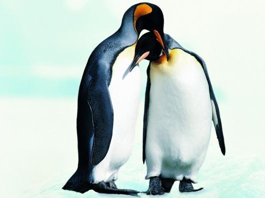 Kissing Penguins | mystery game | Pinterest: pinterest.com/pin/239113061435885939