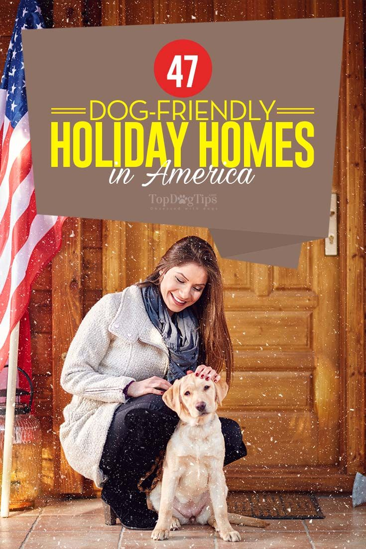 47 Best Dog Friendly Holiday Homes and Cottages in the USA