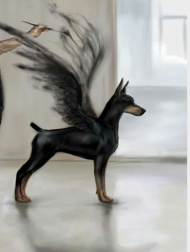 Doberman art