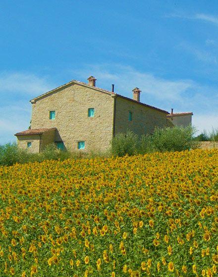Marche - Italia-Fattoria Fontegeloni    flowers outside