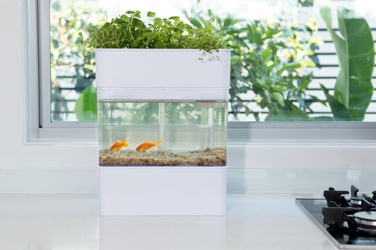 56 best images about mini aquaponics on pinterest for How to build an outdoor aquarium