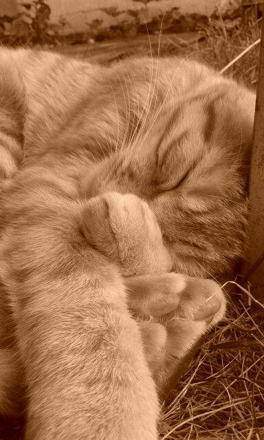 Léon en sieste