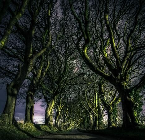 The Dark Hedges, County Antrim, Northern Ireland - 10 real places that look like they belong in fairy tales