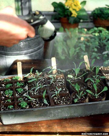 Seed Starting 101Start 101, Raised Lights, Vegetables Gardens, Seed Starting, Seeds Start, Start Seedlings, Gardens Guide,  Flowerpot, Lights Higher
