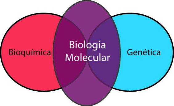 Biologia molecular: 4 pdfs sobre conceitos e técnicas laboratoriais