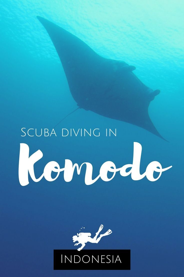 Let you be surprised: how I ended up scuba diving in Komodo, Indonesia – Flores – How to go scuba diving to Komodo from Bali – World Adventure Divers – Read more on https://worldadventuredivers.com/2012/02/21/scuba-diving-in-komodo-indonesia/