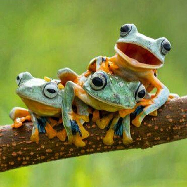 LET ME SPEAK FOR ALL OF US..........RIBBIT.   THANKYOU. L.