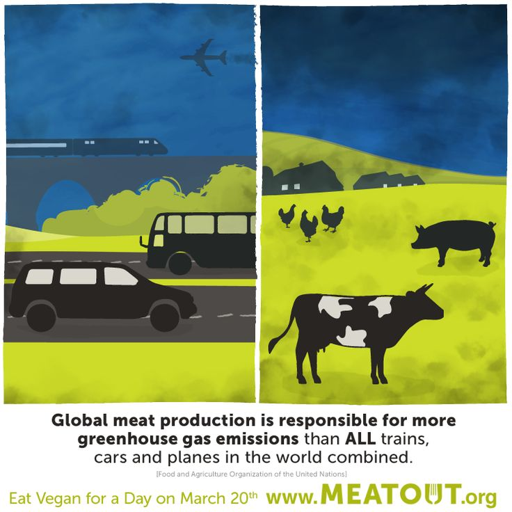 17++ Farm animal rights movement ideas in 2021
