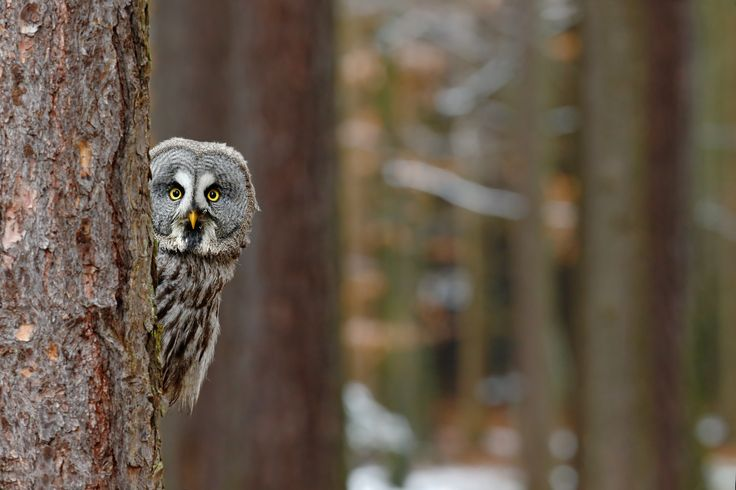 Who said that? 8 owls you might hear at night   Of all the bizarre birds that emerge at night, few create nocturnal ambience quite like an owl.