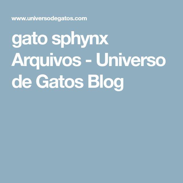 gato sphynx Arquivos - Universo de Gatos Blog