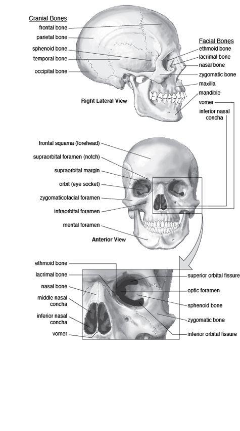 best facial system