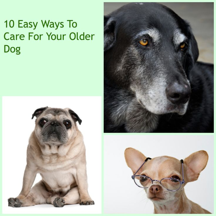 how to take care of your dog& 39