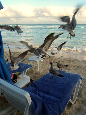 Travel & Lifestyle Diaries: Playa del Carmen Beach