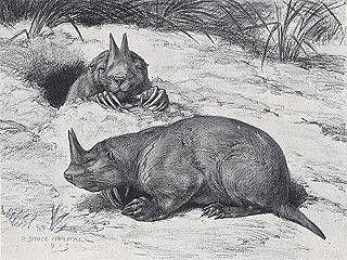 Horned Gophers lived in the prairie areas of Nebraska and have been extinct since the Pliocene. They had two horns which were made of compressed hair and nail like substances. Horned gophers are the smallest known mammals to ever have horns and the only known horned rodents.
