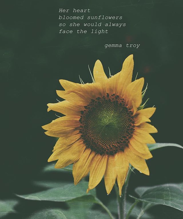 By @gemmatroypoetry I grew this sunflower and it bloomed ...